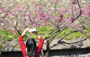 Here Are The Best Places To See Blossoms in Taiwan