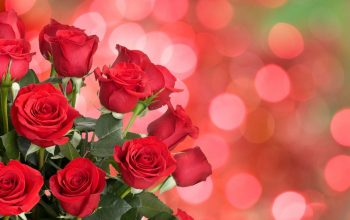 THE FOUR MOST BEAUTIFUL FLOWERS FOR VALENTINE'S DAY